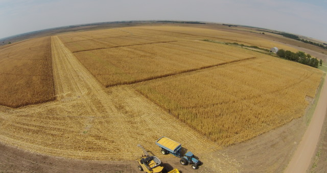 2015 Corn Harvest